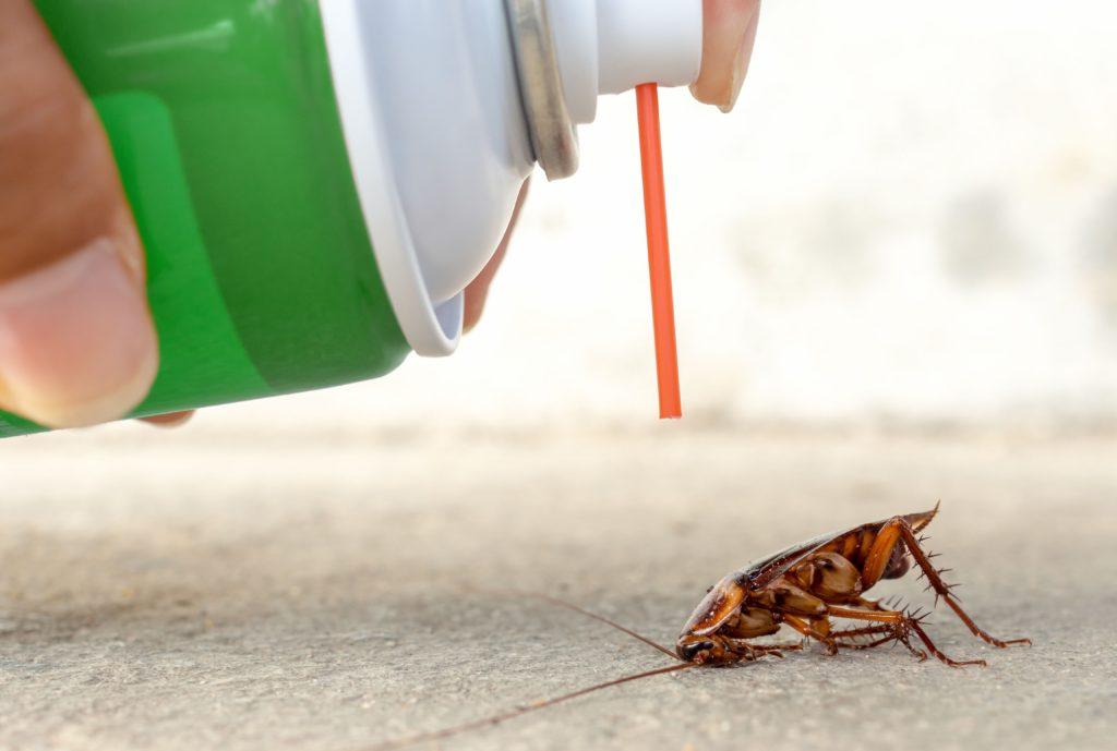 Pest Control Should Be Part of Your Routine Home Maintenance Program